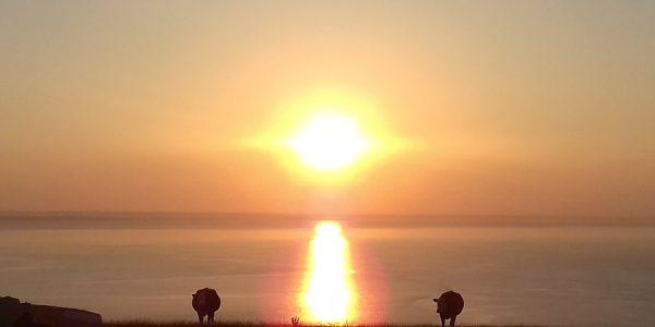 Sunrise, Old Harry rocks