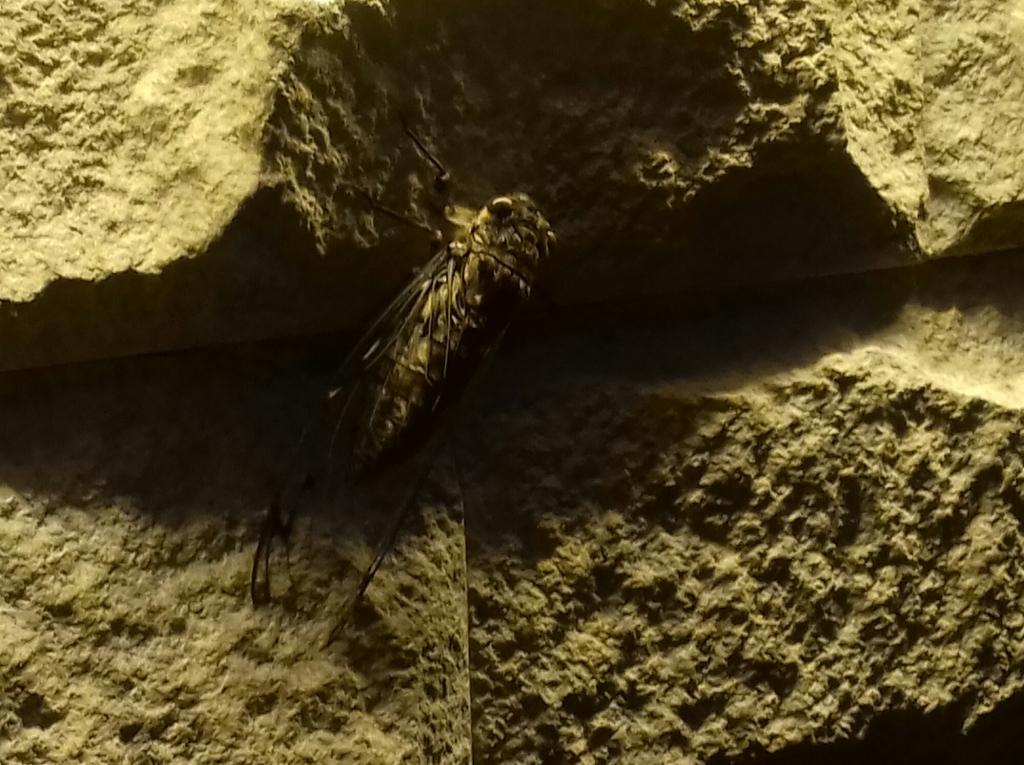bug, gunung mulu, borneo